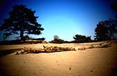 Zandverstuiving Soesterduinen