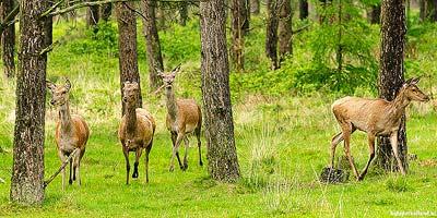 Leuke uitstapjes Wildpark Het Aardhuis Hoog-Soeren