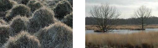 Hoogveengebied Bargerveen bij Emmen