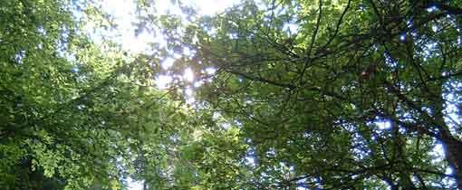 Wandelen tussen de boomtoppen van Drenthe