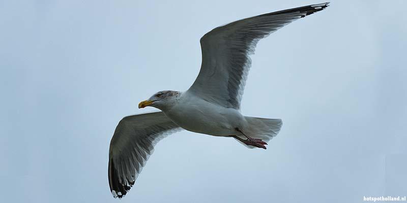Vogels spotten langs de Waddendijk van Texel