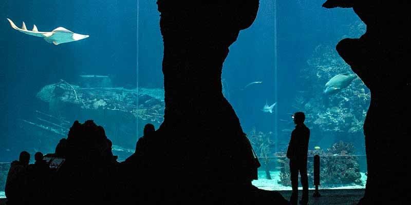 De spectaculaire Ocean in Burgers Zoo