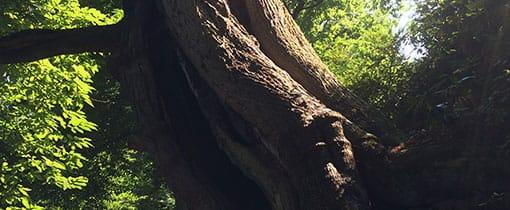 De Kabouterboom in het Kastanjedal bij <em>Heerlijkheid Beek</em>
