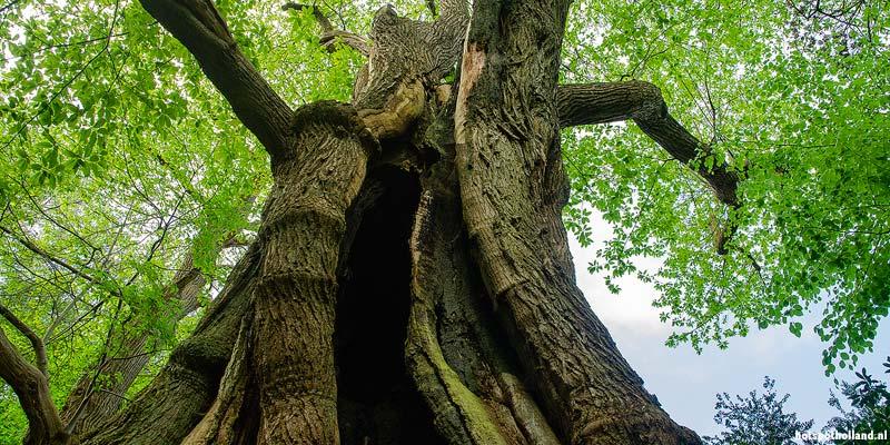 De Kabouterboom in het Kastanjedal bij Heerlijkheid Beek