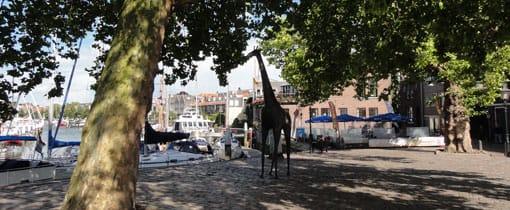 Langs het water in Dordrecht