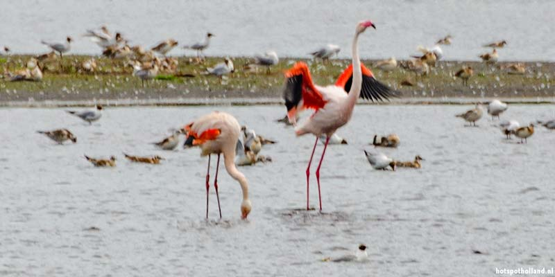 Flamingo bird watching