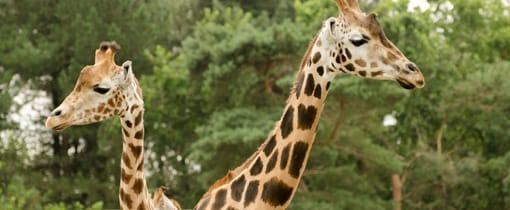 GAIA Zoo in Kerkrade