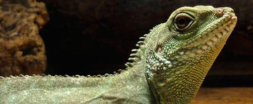 Iguana reptielenzoo, Vlissingen