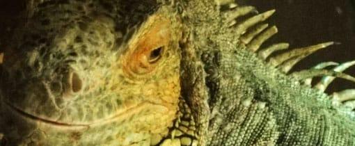 Reptielen en andere dieren in Tilburg