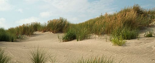 Lekker struinen in de duinen van Schiermonnikoog