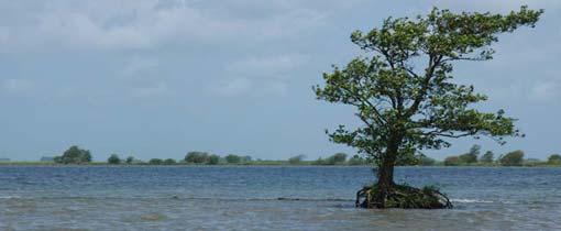 Tiengemeten is omringd door water... Alleen met een pontje kun je op het bijzondere eiland komen