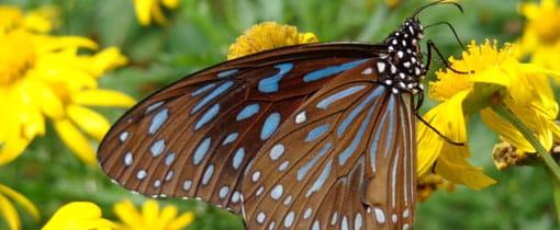 Papiliorama Tropisch vlinderparadijs Drenthe