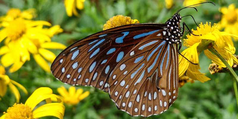 Papiliorama, tropische vlindertuin in Havelte